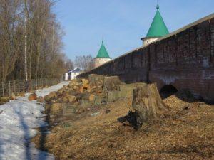 незаконная рубка деревьев Кострома