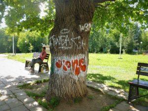 дуб кострома памятник природы