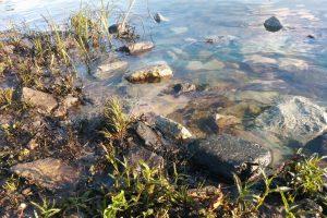 отрава в воде кострома