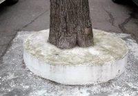 замуровали дерево кострома