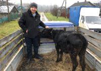 Сотрудники костромской ночлежки подарили корову многодетной семье